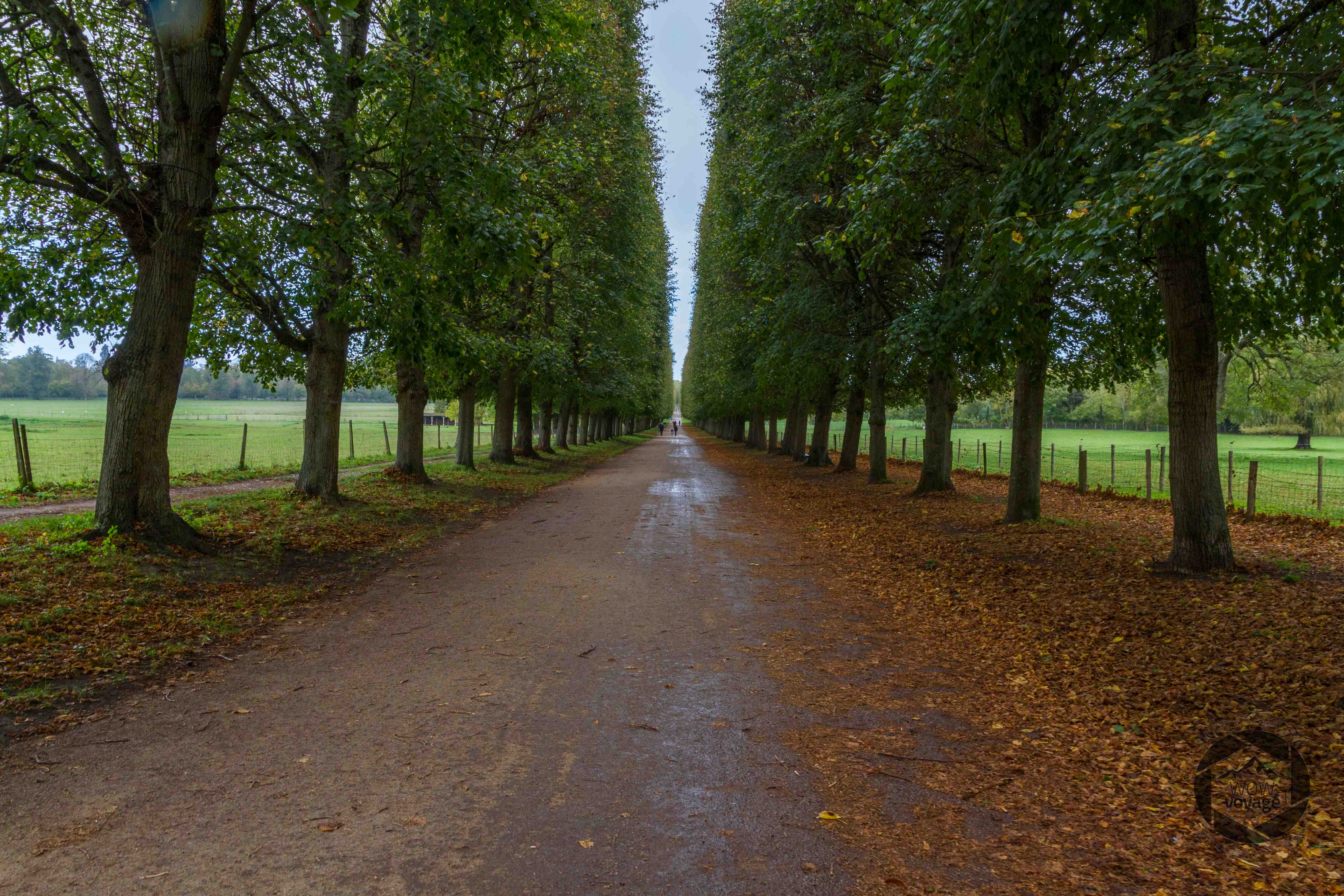 trees small trianon versailles
