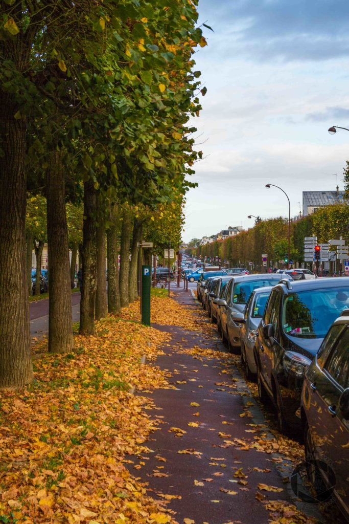 trees autumn leaves parked cars