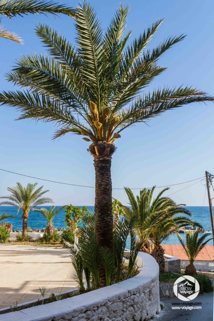a palm tree next to the beach in Panormo Crete, Greece